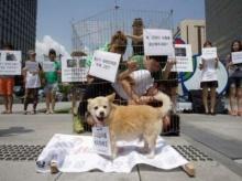 เกาหลีใต้ประท้วงต่อต้านกินเนื้อสุนัขดับร้อน