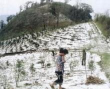 เมื่อ 50 ปีก่อน หิมะเคยตกที่เมืองไทย