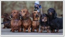 10 อันดับสายพันธุ์น้องหมาที่ สุดซ่า แสบ ซน