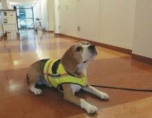 คลิฟฟ์ สุนัขมหัศจรรย์ ไม่ดมอึ แต่ดมผู้ป่วย รู้เลยใครติดเชื้อ !!!