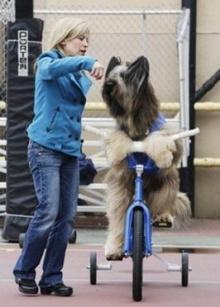 ทึ่ง!สุนัขโชว์ปั่นจักรยาน-ขี่สกูตเตอร์