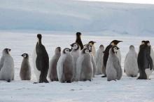 ตะลึง! พบอาณาจักร ′เพนกวินจักรพรรดิ′
