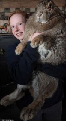 ราล์ฟ กระต่ายยักษ์ที่มีน้ำหนักมากกว่าเด็ก 3 ขวบ!!!