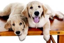 เกร็ดความรู้เกี่ยวกับน้องหมา