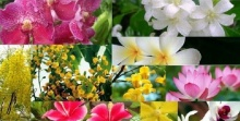 รู้รึเปล่า... ดอกไม้ประจำชาติ อาเซียน มีดอกอะไรเป็นสัญลักษณ์บ้าง (ล่ะเนี่ย) ?