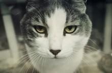 ใครจะเชื่อ? CIA เคยคิดจะฝึกแมวให้เป็นสายลับ