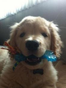 พบกับโฮ่งน้อยตาบอดสุนัขที่ผู้คนชมว่าน่ารักมาก