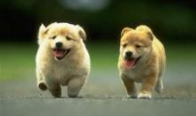สุนัขและแมวหลงทางแต่กลับบ้านได้ยังไง