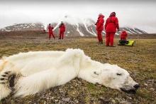 โลกร้อนหนักหมีขาวอดตาย