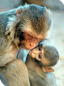 ลิงทะโมน- เรื่องจริงของ พงษ์เทพ กระโดนชำนาญ