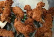 แยกกันออกมั้ย? ไก่ทอดน่าอร่อย หรือลูกหมาน้อยน่ารัก