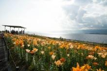 Maishima เกาะแห่งดอกลิลลี่กลางทะเลโอซาก้า