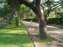 สวนลุมฯคว้าอันดับ4สวนสาธารณะยอดนิยมเอเชีย-′วัดโพธิ์′ที่8สุดยอดที่ท่องเที่ยว