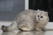 ตกงานเพราะช่วยแมว?