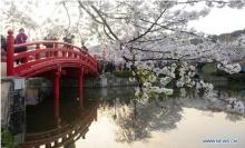 9 สุดยอดสถานที่ ชมซากุระทั่วโลก!!