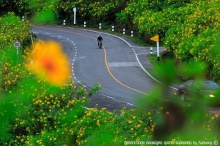 เที่ยวตามรอยเส้นทางดอกไม้ผลิบาน (ฤดูหนาว)