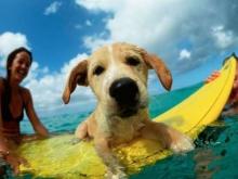 10 ที่เที่ยวสำหรับคุณและสัตว์เลี้ยงแสนรัก
