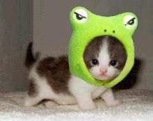 ความน่ารักของแมว