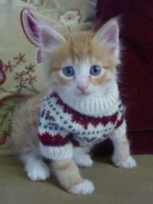 เหล่าสัตว์เลี้ยงแสนน่ารัก กับเสื้อกันหนาวสุดชิค!!