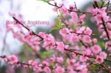 อ่างข่าง…โรแมนติก ในวันสีชมพูแห่งม่านหมอก