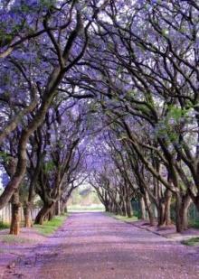 10 อุโมงค์ต้นไม้ที่สวยที่สุดในโลก สวยมาก!!!!