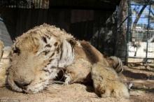 สวนสัตว์ที่น่าสลดใจที่สุดในโลก!!