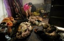 (ชมภาพ18+) จีนบุกทลายโรงเชือด สุนัข ผิดกฎหมายในมณฑลเหอหนาน