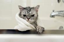 จับน้องเหมียวตัวแสบ อาบน้ำให้สะอาด
