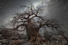"""นี่คือสุดยอดภาพถ่าย """"ต้นไม้"""" เก่าแก่ ท่ามกลางความเจิดจรัสของแสง """"หมู่ดาว""""!"""