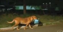 เธอพบว่าหมาที่เธอเห็นประจำชอบเอาถุงข้าวของเธอไป แต่พอแอบตามไปดูเท่านั้นแหละ..