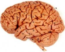 สมองมีสัมผัสที่ 6 ต่อปริมาณแคลอรี