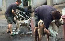 ประทับใจ! เมื่อได้เห็นสิ่งที่ฝรั่งคนนี้ทำกับหมาจรจัดข้างถนน!