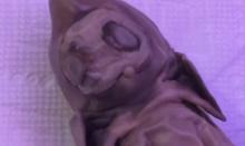 จริงอะ!? เอเลี่ยน-สัตว์กลายพันธุ์พบซากสิ่งมีชีวิตแปลกประหลาดในสหรัฐฯ(คลิป)