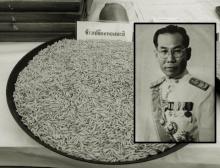 ประวัติ'ข้าวหอมมะลิ'ตั้งแต่ปี 2493 เคยถูกทิ้ง-ยกเลิกการทดลอง
