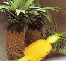 ศอกขาวเนียนด้วย เอนไซม์จากสับปะรด