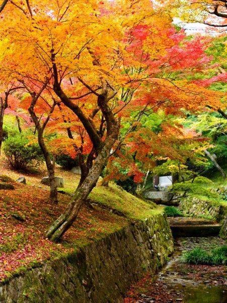 จากวัด Tofukuji ที่เกียวโต