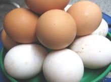เรื่องน่ารู้เกี่ยวกับไข่