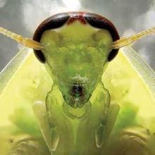 (ขำ ขัน) แมลงสาปผู้ยิ่งใหญ่