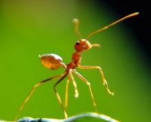 เคล็ดลับกำจัดมดหรือแมลงต่างๆ