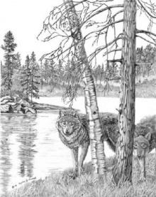 ภาพปริศนา :หมาป่า