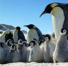 ทำไมนกเพนกวินถึงบินไม่ได้?