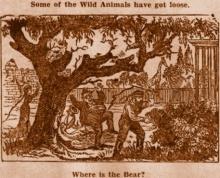 ภาพปริศนา : the bear