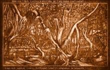 ภาพปริศนา : ผืนป่า