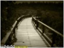สะพานชีวิต