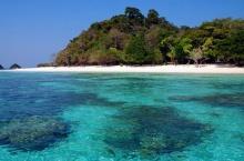 ดำน้ำชมปะการังที่ เกาะรอกนอก