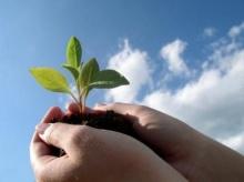 ดินสำหรับปลูกต้นไม้