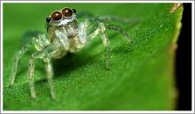 สาเหตุที่แมงมุมไม่ติดใยของมันเอง