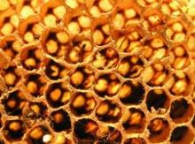ความมหัศจรรย์ของรังผึ้ง