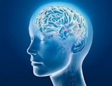 การฟื้นฟูสมอง เพิ่มความฉลาดทางปัญญา