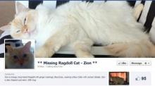 ตามหาแมวหายด้วยโฆษณาบนเฟซบุ้ค